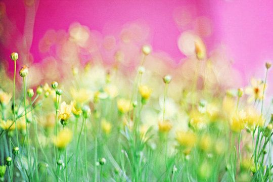 Then the time came pink wall art flower photography and pink walls flower photography hot pink wall art bubblegum pink yellow green decor baby girl nursery decor little girls room wildflowers 8x12 print mightylinksfo
