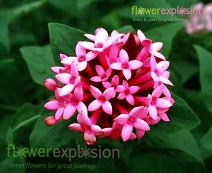 Blog Not Found Beautiful Flowers Flower Names Flower Pictures