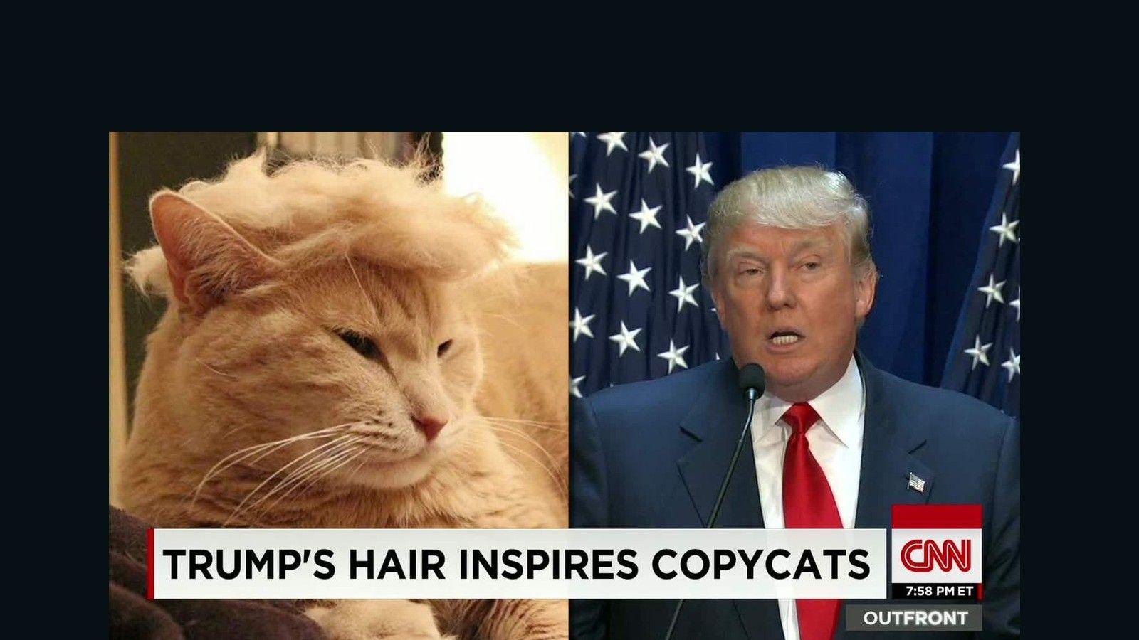 Donald Trump Funny Memes In Spanish : Trump memes dogs cat things pinterest trumps donald