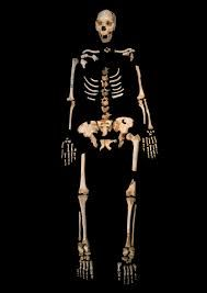HOMO HEIDELBERGENSIS:Su nombre científico deriva de la proximidad de la ciudad de Heidelberg (Alemania) al lugar donde fueron hallados los primeros fósiles, lo que subraya el hecho de que se trata de los primeros homo que alcanzaron las estepas del centro y norte de Eurasia.  Su anatomía ha sido descrita en gran parte por los restos encontrados en el yacimiento de la Sima de los Huesos en Atapuerca.