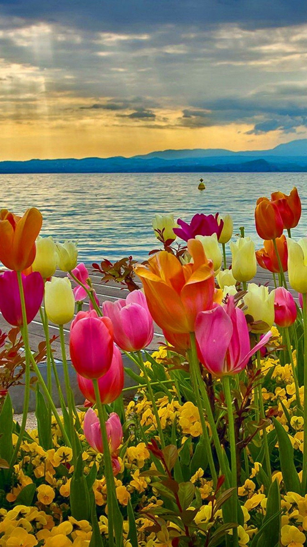 Iphone 7 Wallpaper Spring Flowers Nature Spring Scenery Spring Wallpaper