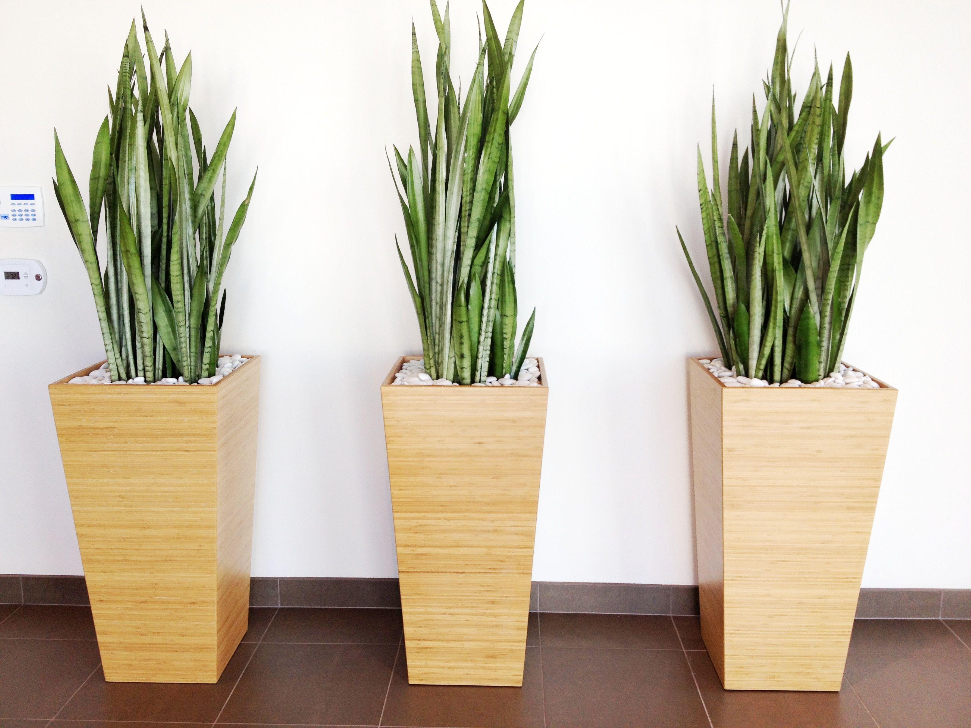 Bamboo Planters Large Indoor Plants Indoor Plant Pots 400 x 300