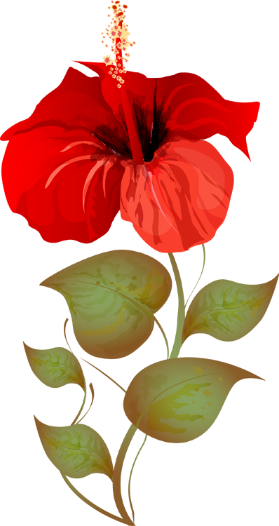 Grab This Free Summer Flower Clip Art | Art, Hibiscus and Summer