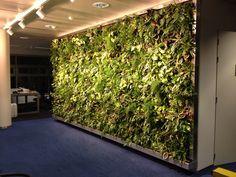 Verticale Tuin Binnen : Verticale tuin binnen groene muur pinterest muur en tuin