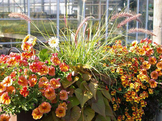 Balkon in organgen farben gestalten zahrada pinterest for Balkon gestalten pinterest