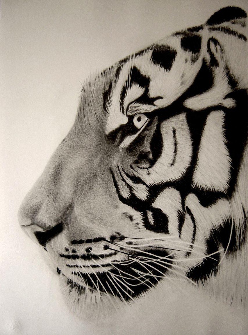 Tete De Tigre Details Eric Stavros Eric Stavros Animales