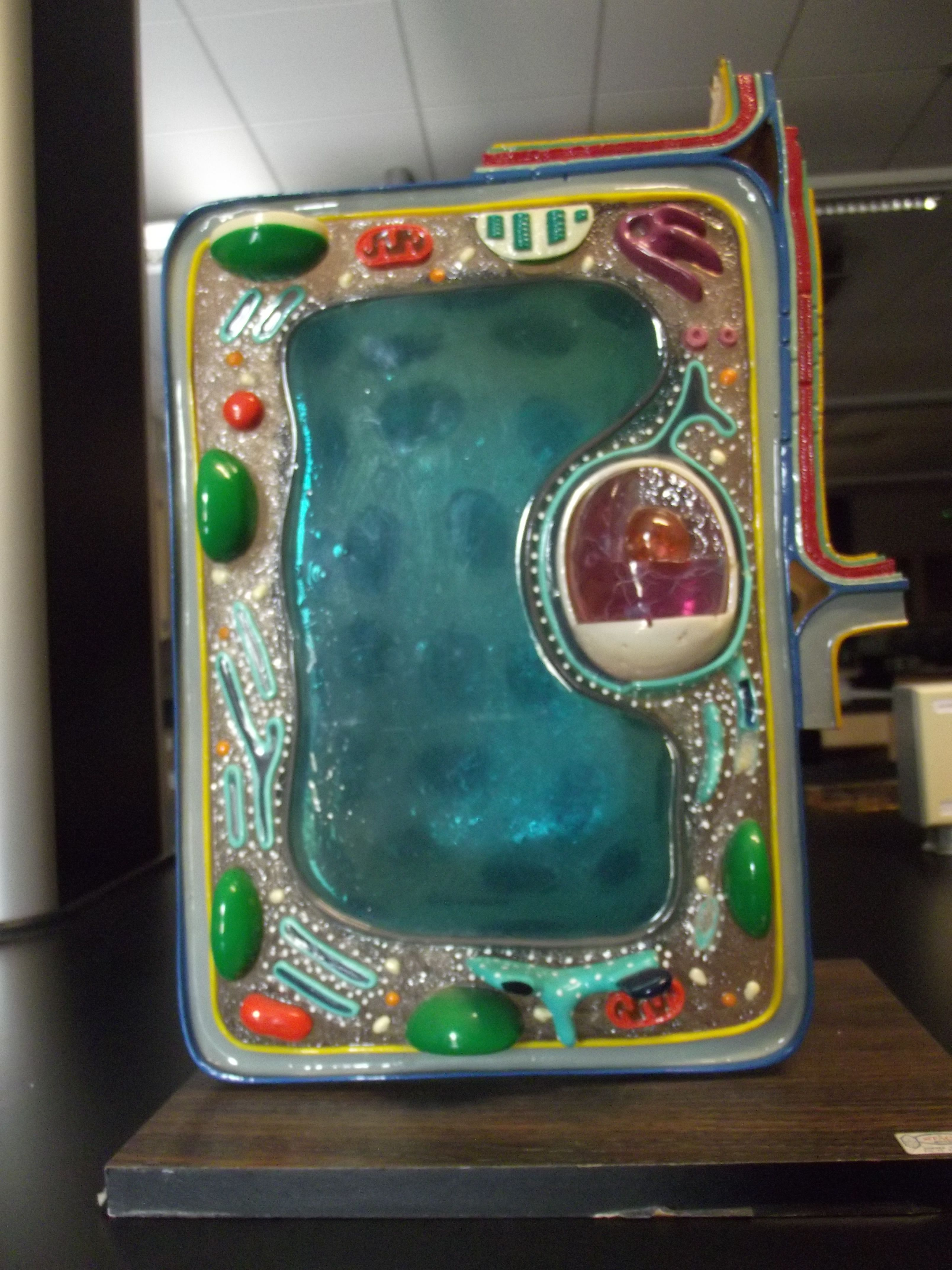 15 Plant Cell Model Ideas Clay Edible Recycled And How To Make 3d Animal Diagram Labeled Of A With Labels Great Way For Students Learn About The Different Parts Through Creating Labeling Writing Presenting Class Plantcell