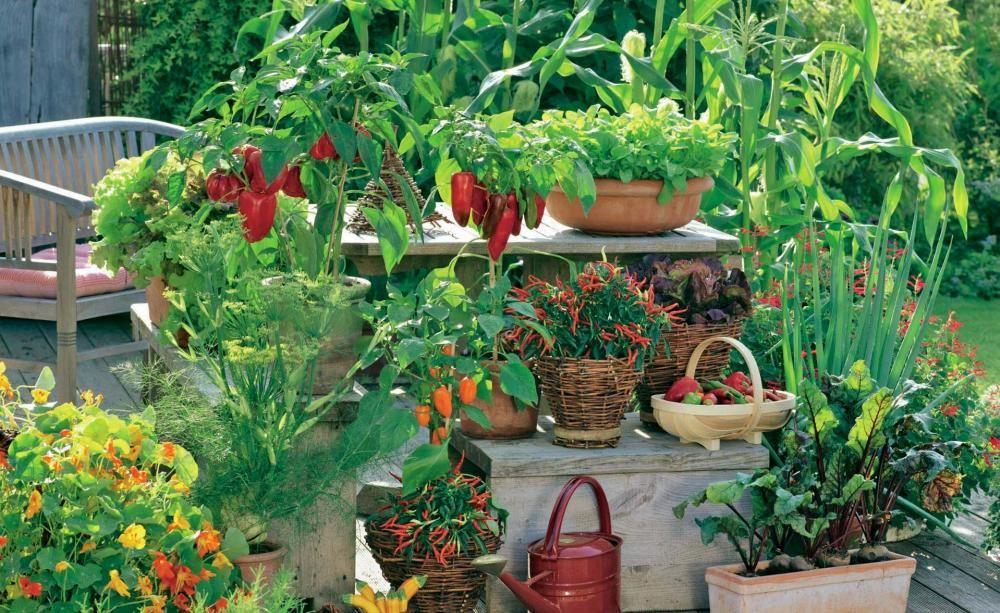 Gemüseanbau: Große Ernte auf kleiner Fläche | Ernte, Küchengarten ...