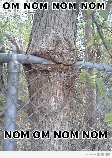 Hungry tree.