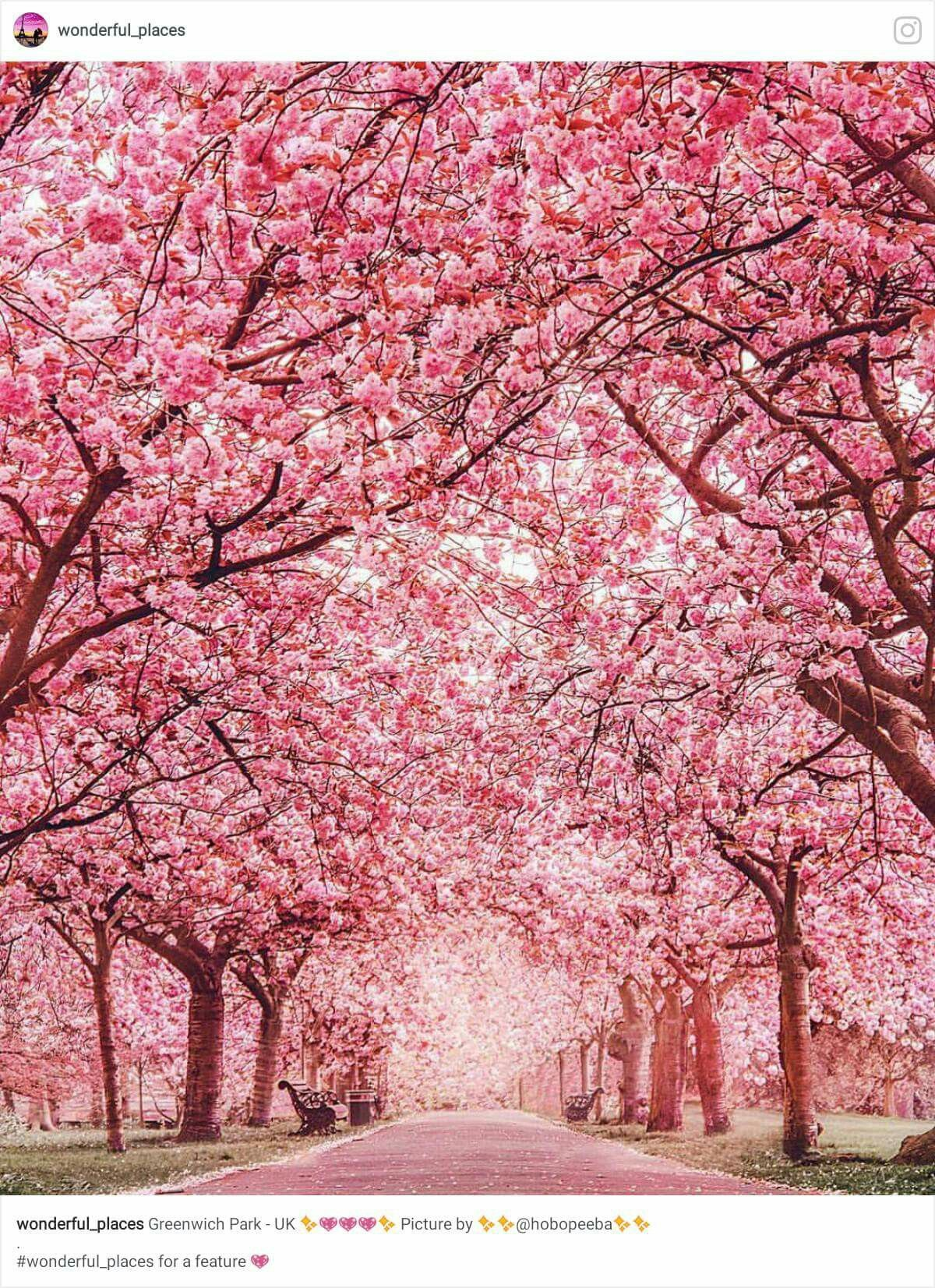 Pin By Andre Loal On Pink Looks Good On Everything Pink Blossom Tree Landscape Nature