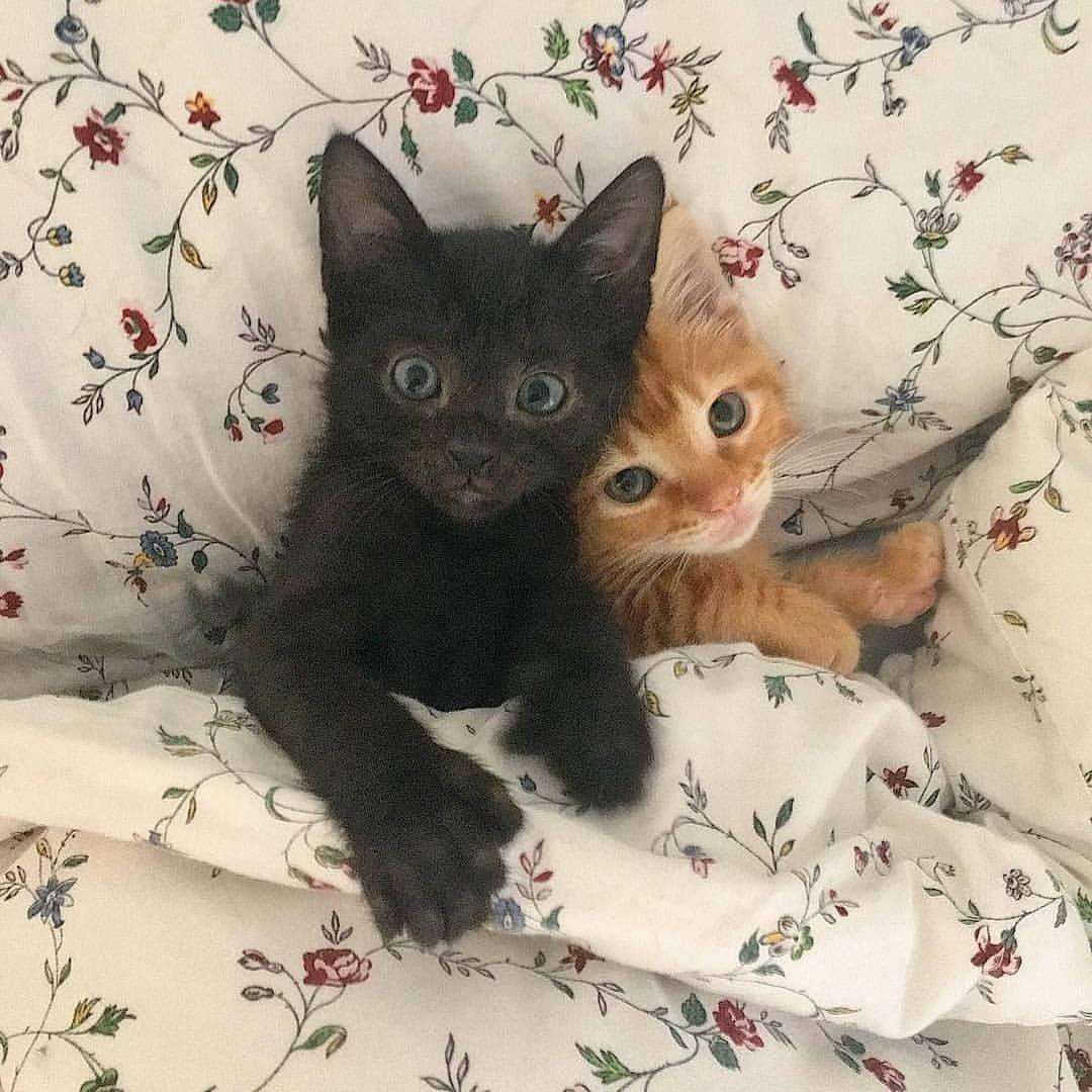 Catsbunker On Bild Gram Posts Videos Stories Bildgram Cats Kittens They Are So Cute Tag A Friend B Cute Cats Kittens Cutest Cute Baby Animals