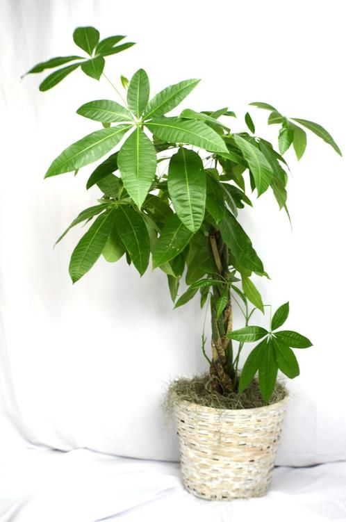 Will our money tree bring you luck this winter?