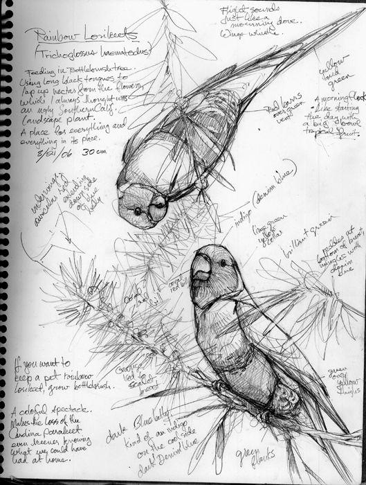 Draw A Bird Own A Bird Bird Drawings Bird Art Nature Drawing