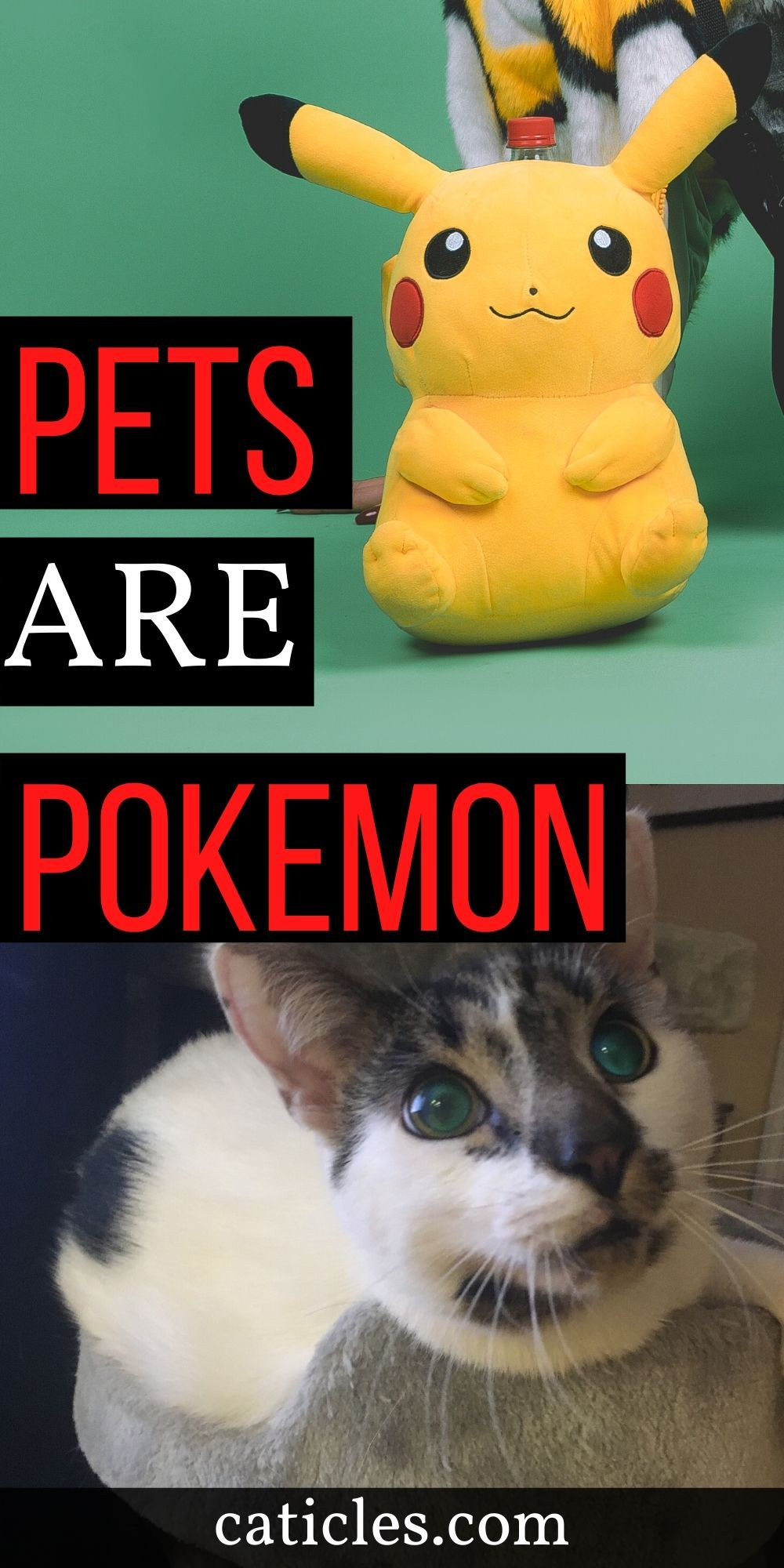 19 Funny But True Ways Your Pets Are Like Pokemon Caticles In 2020 Kitten Care Cat Problems Cat Mom