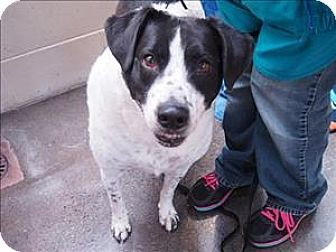 Portland Or Border Collie Mix Meet Rosie A Dog For Adoption