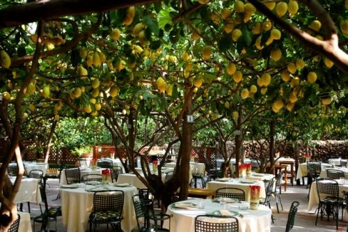 Capri, dining under lemon trees? Divine! Garden pictures