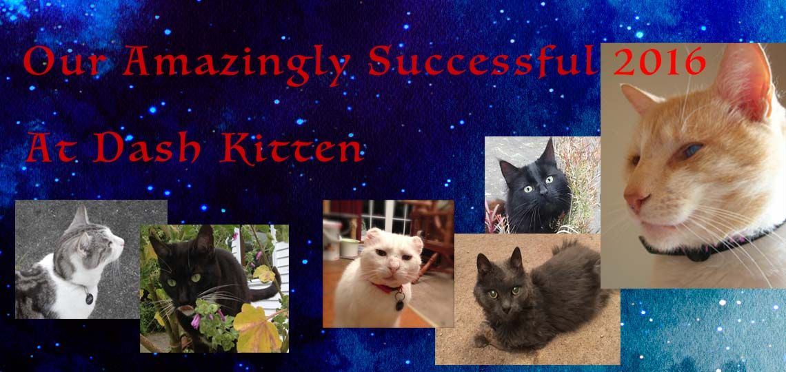 To begin 2017we encouraged our readers to set goals, today we want to report on our succesful 2016 at Dash Kitten. We hopeyou will join us to celebrate a year that has meant a lot tous.