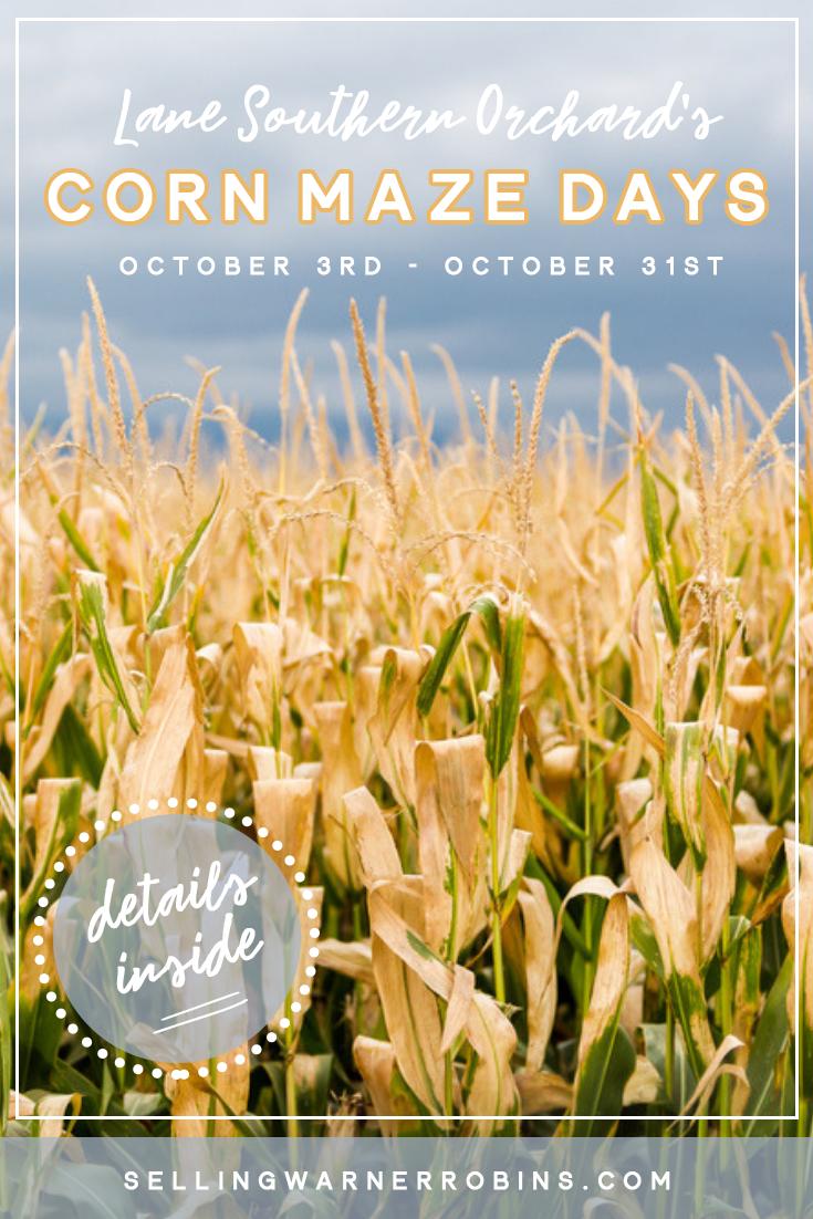Corn Maze Days at Lane Southern Orchards Lane southern