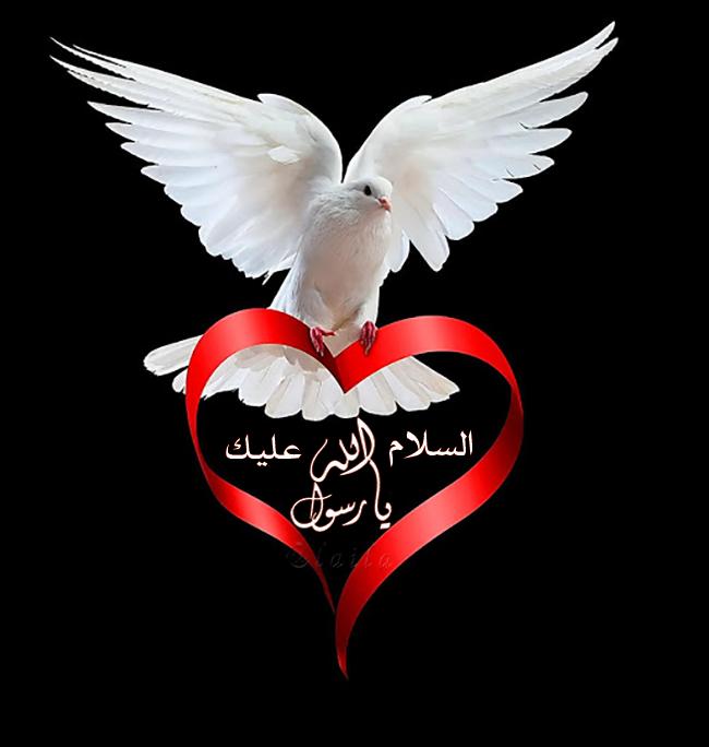 السلام عليك يا رسول الله Peace And Love White Doves Love Heart