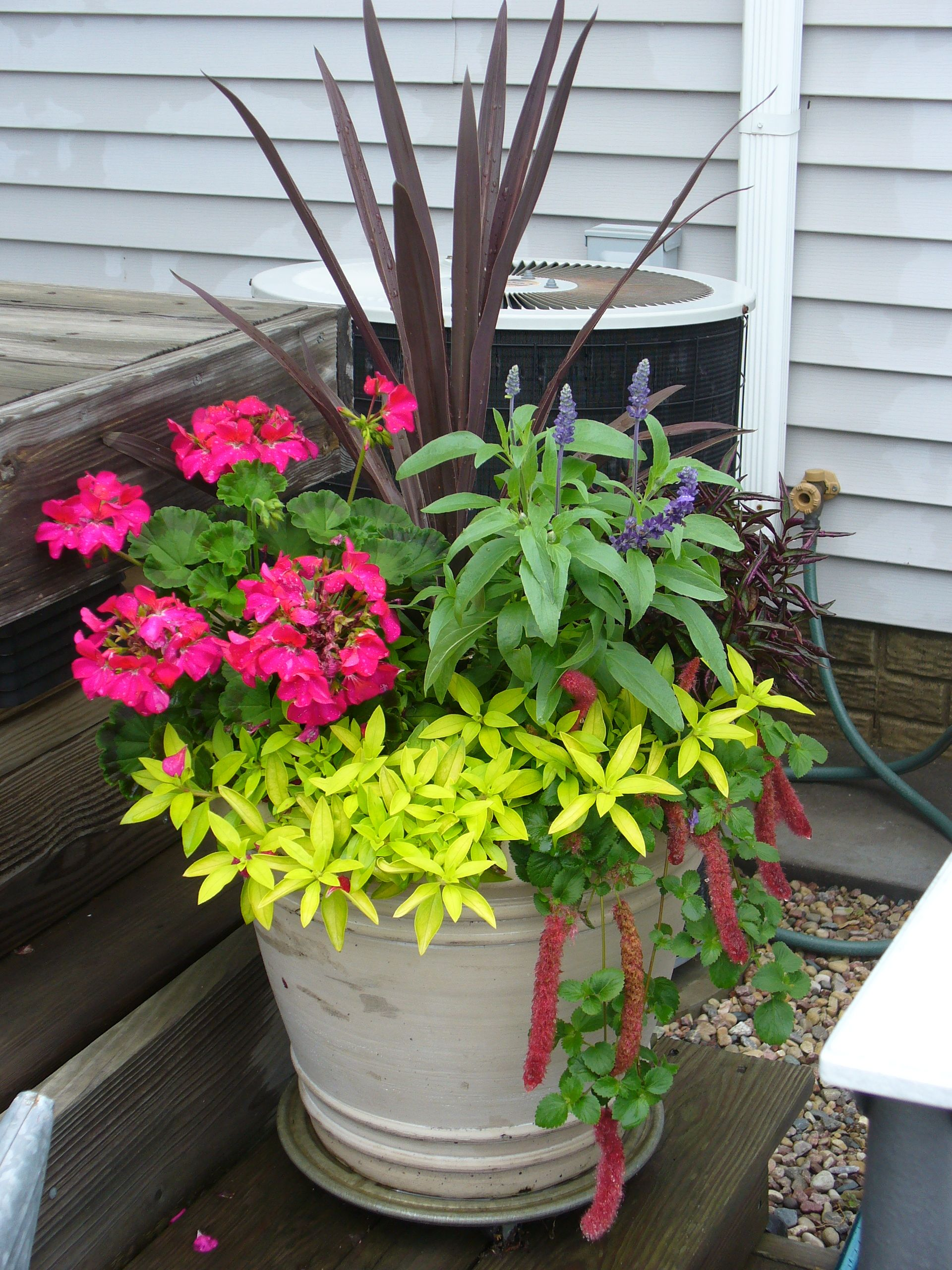 Flowers on the deck Plants on deck, Garden containers