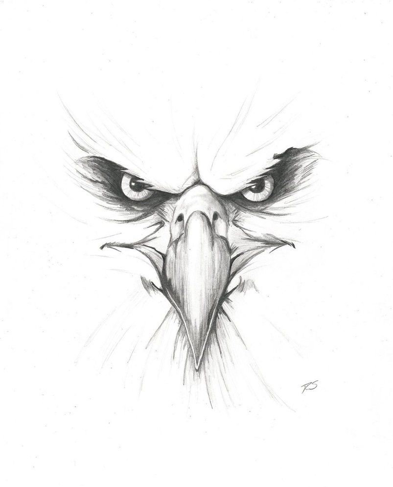 Eagle drawings angry eagle by rshaw87 on deviantart