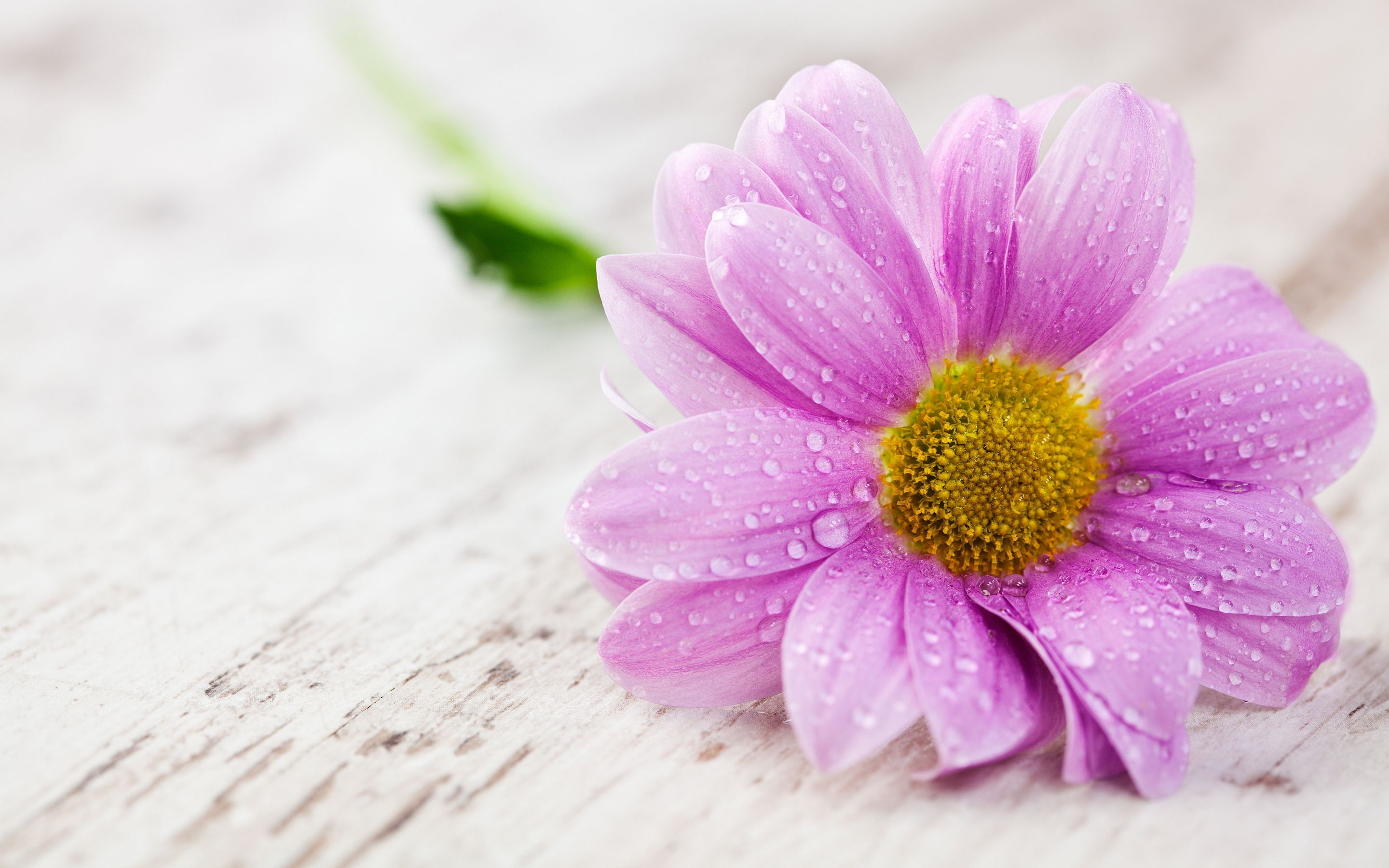 40 beautiful flower wallpapers free to download beautiful
