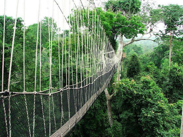 Atractivos turísticos del mundo: Kakum National Park. Ubicación: Central Region, Ghana.