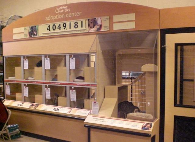 Petsmart Fairfax Va Petsmart Adoption Center Cat Adoption