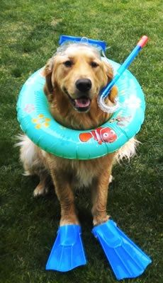 Ready to swim! Pool pets Love your pet, Cute cats and dogs