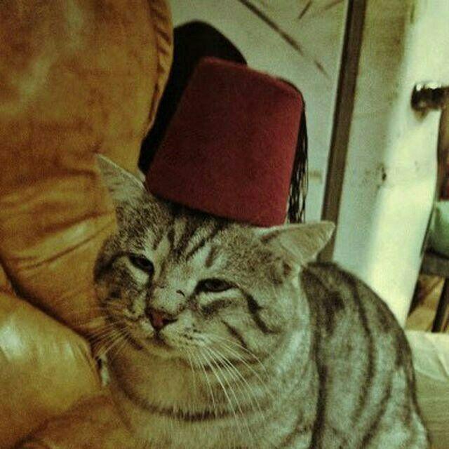 gattino porno canale