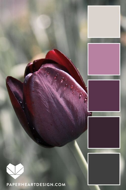 Color Palette: You Can Learn a Lot of Things From the