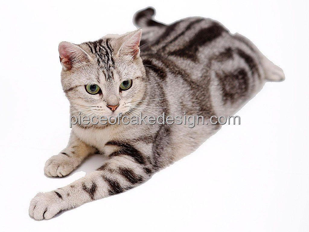 8 Round Cat Breeds American Shorthair Birthday Edible Image