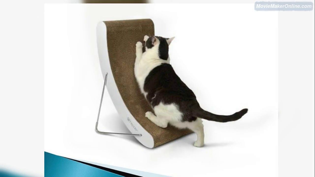 Https Dnclifestyle Com Au Is One Of The Best Places Online To Get Luxury Cat Scratchers And Other Accessories That Y Luxury Cat Cat Scratchers Cat Scratcher
