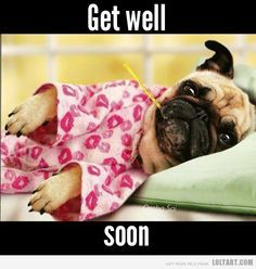 Pug Get Well Cards Google Search Sick Puppies Pugs And Kisses
