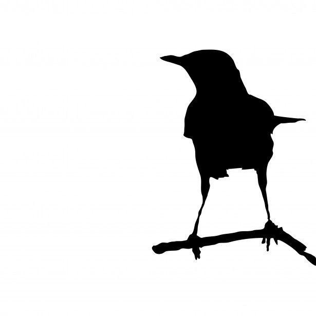 Image result for crow pin | birds | Cuervo, Letras