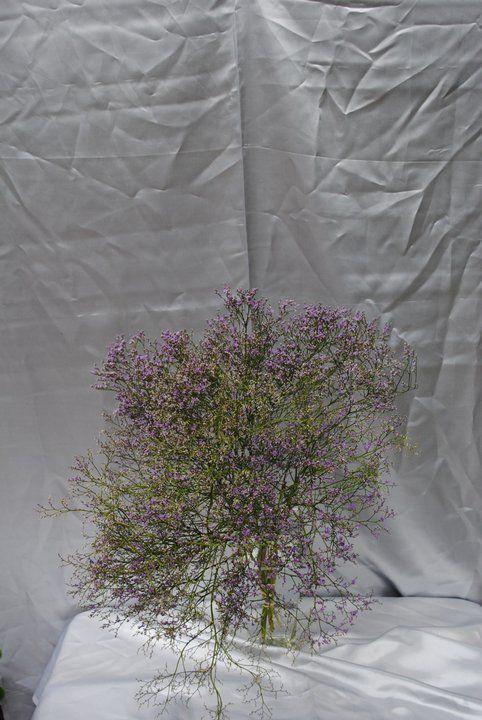 Cool Filler Flower Nice Alternative To Baby S Breath Babys Breath Flowers Wedding Flowers