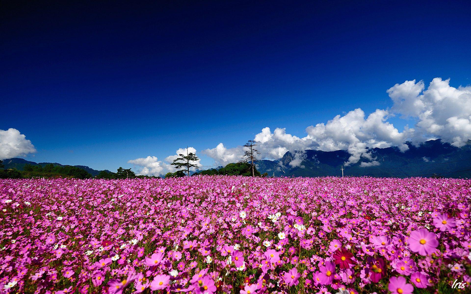 Flower Field Wallpapers | Best Wallpapers | Beautiful Wallpapers ...