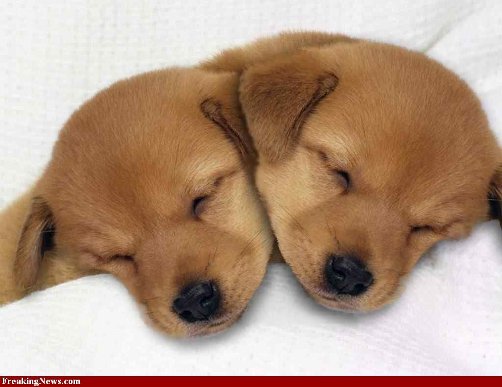 It S A Two Headed Puppy Puppies Dogs Animals