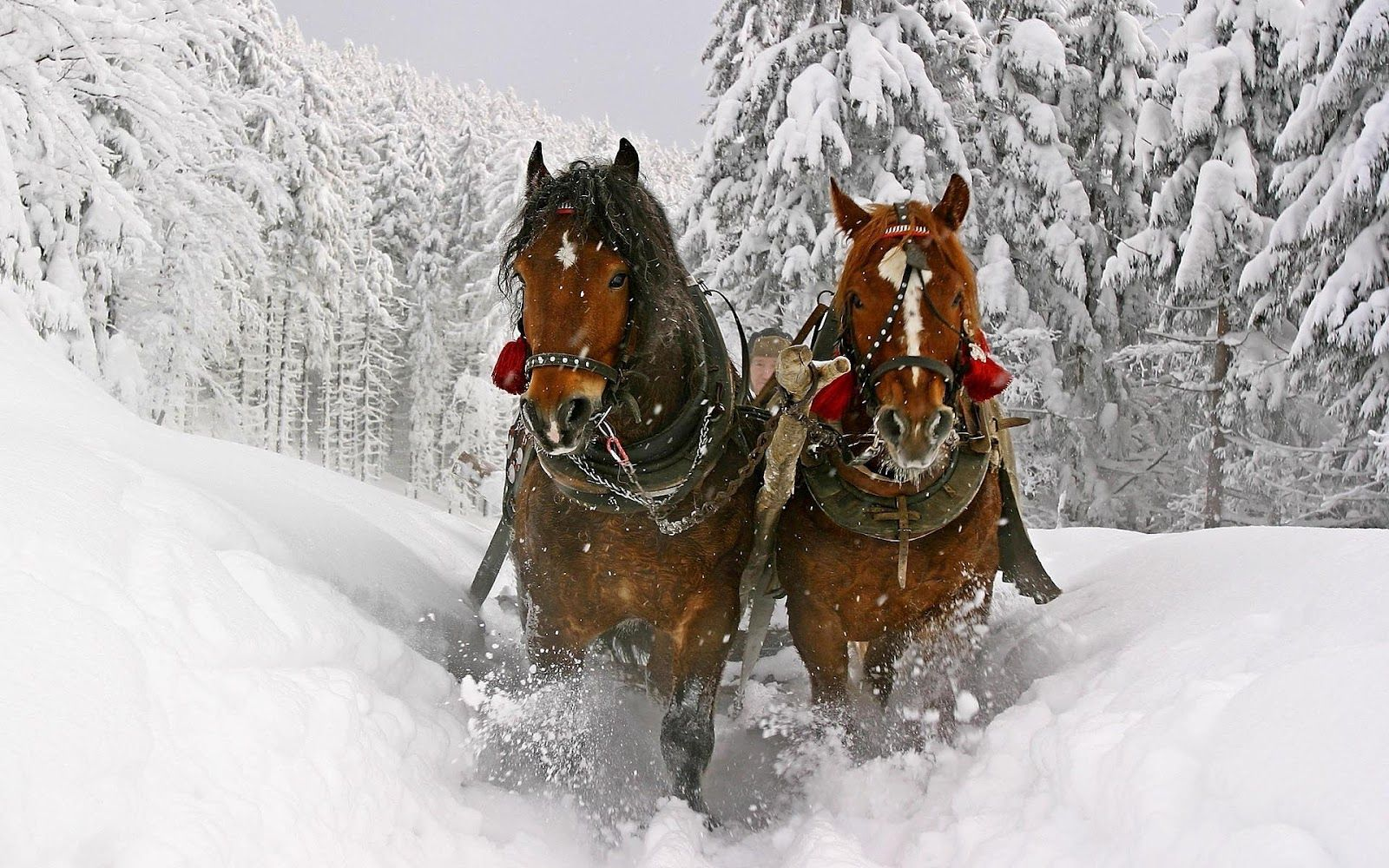 Top Wallpaper Horse Winter - 1825136e7eda992b5291fea6441360b6  Graphic_394274.jpg
