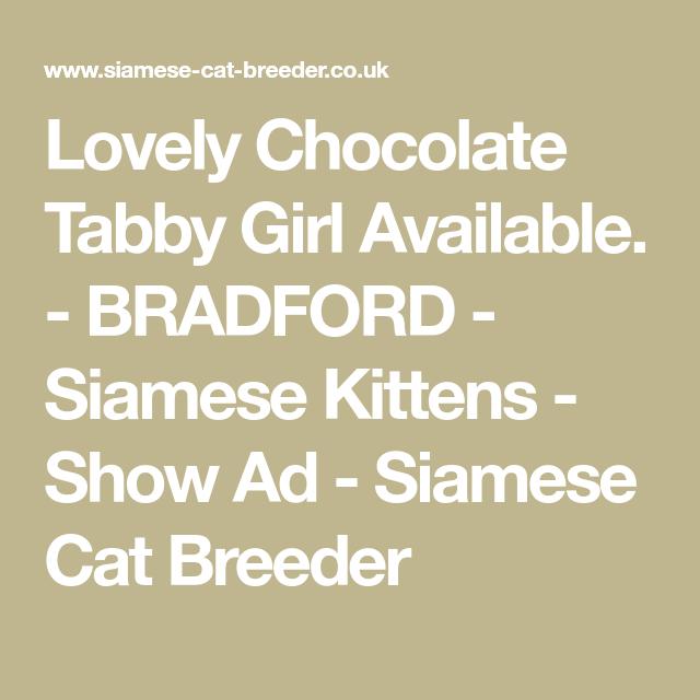 Show Ad Siamese Kittens Siamese Cat Breeders Cat Breeder