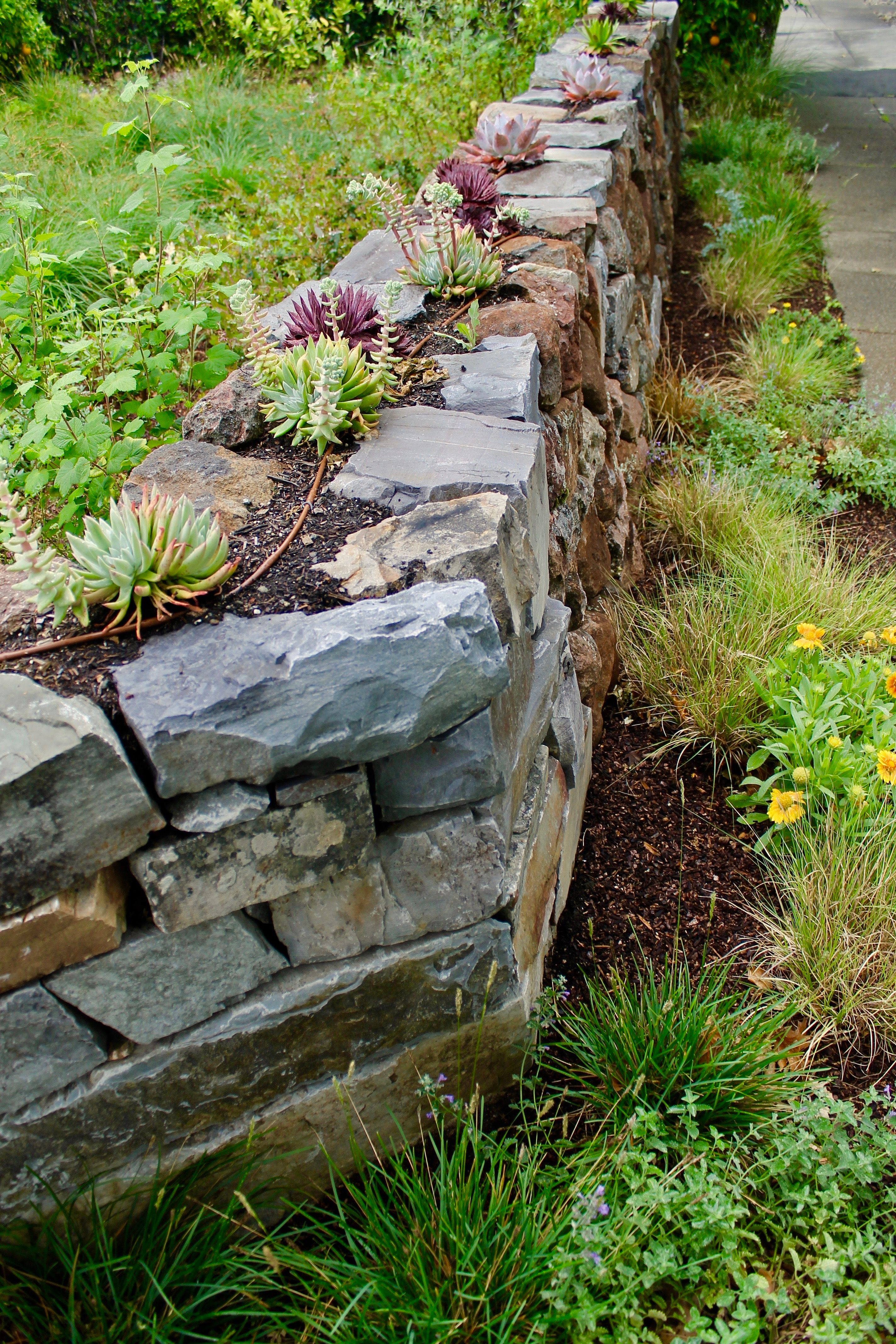 A Dry Laid Stone Wall With Habitat Meadow Plantings And