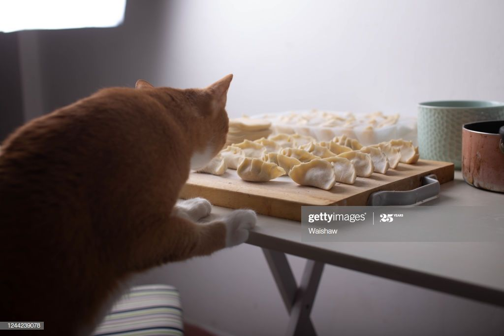 The Cat Looking At The Dumplings In 2020 Cats Infographic Templates Photography