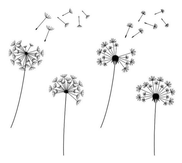simple dandelion clocks drawing pinterest dandelion clock rh pinterest com dandelion clipart black and white dandelion clip art free