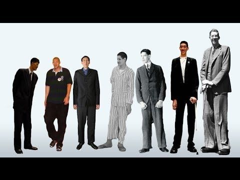 Top 10 Tallest Man in the World | Top 10 Tallest Men In The World