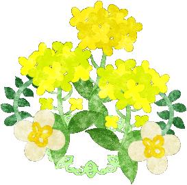 春のフリーのイラスト素材綺麗な菜の花のイラスト Free Illustration