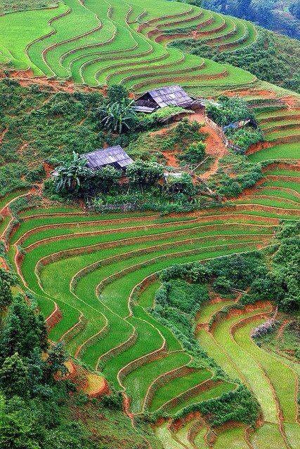 Campo De Cultivo En Vietnam Paisajes Lugares Preciosos