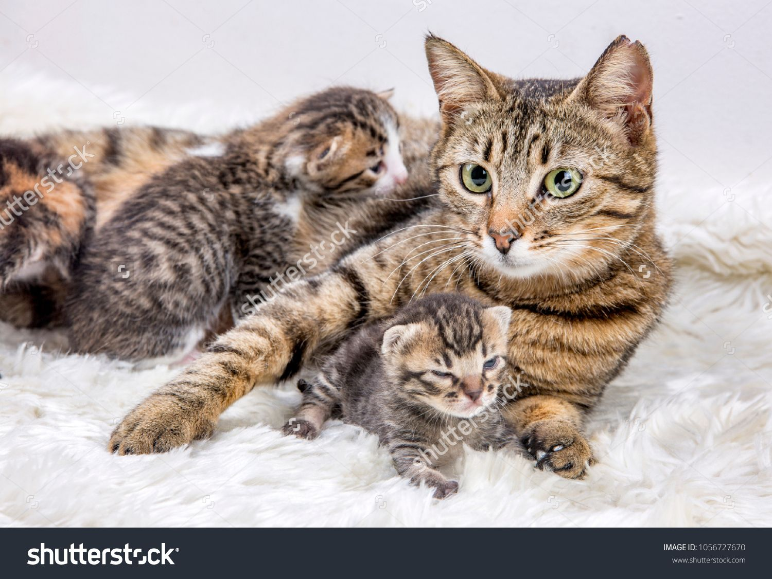 Mom Mother Cat And Baby Cat Kitten Mother Mom Cat Kitten Kittens Cutest Baby Baby Cats Baby Kittens