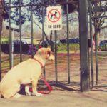 Rover plantea 65 millones de dólares para hacer crecer su perro sentado plataforma a nivel mundial