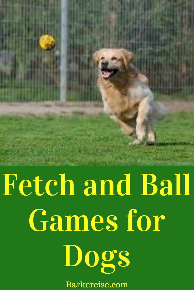 How To Get My Dog To Fetch A Ball