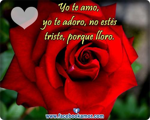 Rosas Rojas Con Frases De Amor: Tarjetas De Amor Con Rosas Rojas